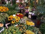 הולנד משפחות-הטוליפ ההולנדי-טיולי מסורת